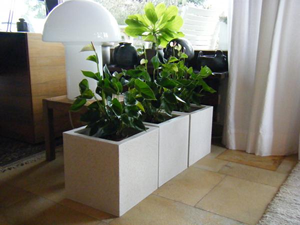 Blumenkübel in Wohnräumen
