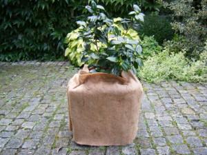 Vliese für Kübelpflanzen – so kommen Ihre Sträucher und Gewächse gut über den Winter