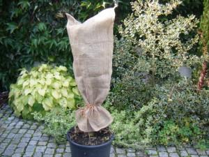 Tipp: Winterruhe bei Kübelpflanzen – jetzt auf Schädlinge an Pflanzkübeln achten