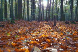 Herbst, Gartenarbeit
