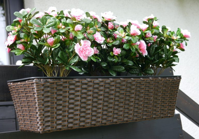balkonk sten im winter anpflanzen leicht gemacht eastwest trading blog gartenpflege tipps. Black Bedroom Furniture Sets. Home Design Ideas