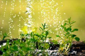Hitzestress bei Pflanzen