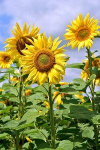 Pflanzen in der Sommerhitze
