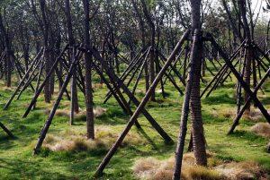 stabilisierte Bäume