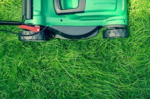 Vertikutieren des Rasens