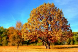 Gartenpflege von Bäumen im Herbst