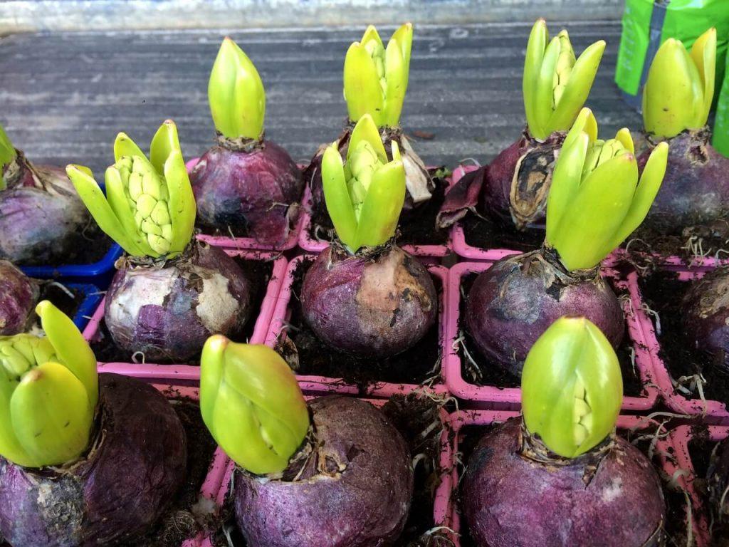 Der Garten Im November Eastwest Trading Blog Gartenpflege Tipps