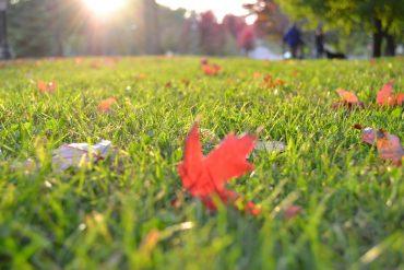 Rasenpflege im Herbst