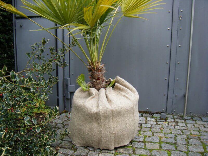 Pflanzkübel zum Überwintern in Jute eingepackt