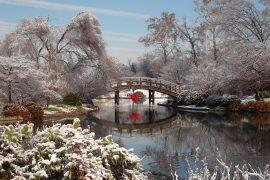 Der Garten im Dezember