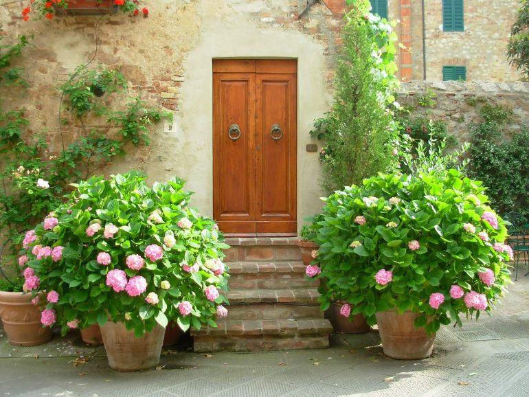 Pflanzkübel mit Hortensien vor dem Eingang