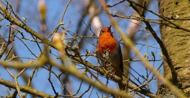 Vogel auf einem Baum im Garten