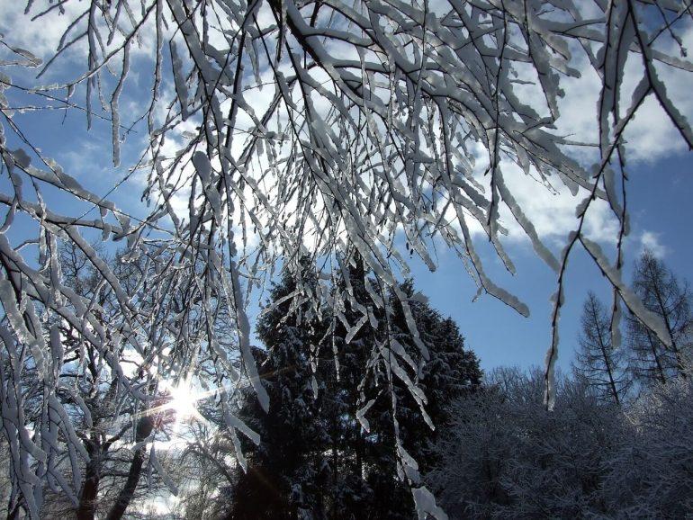 Winterlicher Garten im Januar