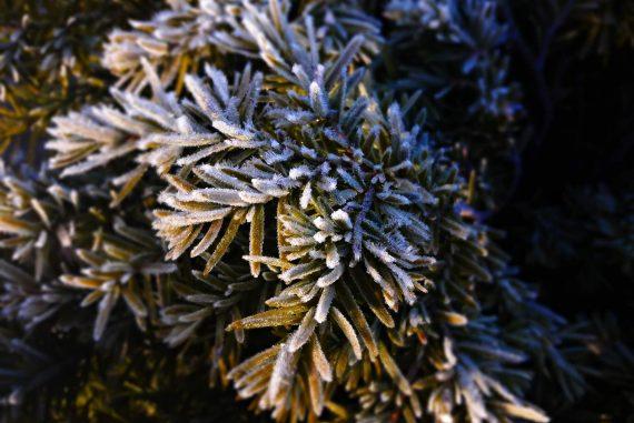 Natürlicher Frostschutz für Pflanzen