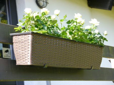 Balkonkasten VINCI L80x B18x H18cm aus Polyrattan in mokka, mit Ablauf!