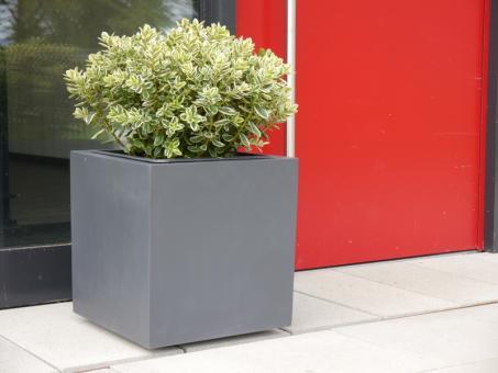 Pflanzkübel für ROLLEN (extra) aus Fiberglas in anthrazit 50x50x47 cm