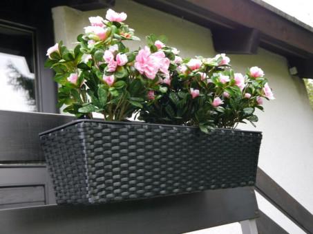 Balkonkasten PRIMO aus Polyrattan in schwarz 60x20x16 cm