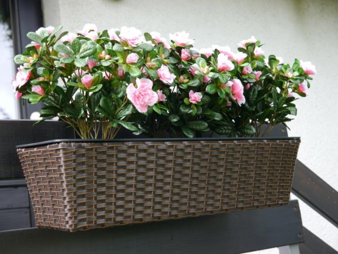 balkonkasten primo pflanztrog pflanzk bel blumenk bel pflanztr ge 60x20x16cm polyrattan mokka. Black Bedroom Furniture Sets. Home Design Ideas