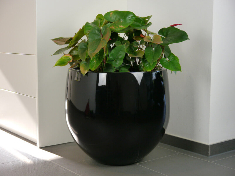 pflanzk bel yoko aus fiberglas in hochglanz schwarz bei east west trading. Black Bedroom Furniture Sets. Home Design Ideas